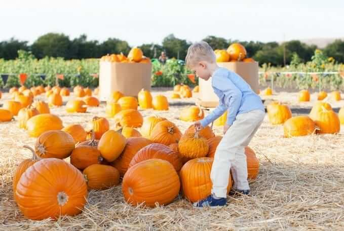 best halloween activities in the central valley for 2017